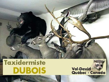 taxidermie dubois